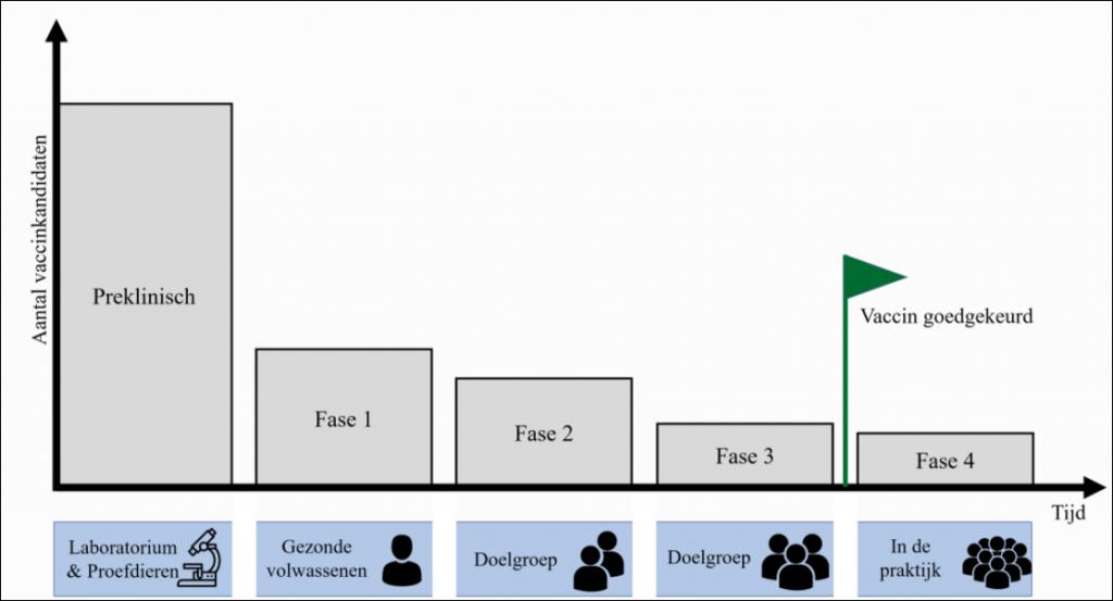 overzicht fasen vaccinatieontwikkeling